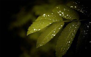 Composition, propriétés, effets supposés : tout savoir sur les e liquides CBD