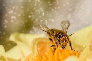 Les différents miels et les bienfaits des autres produits : gelée royale, la cire et la propolis