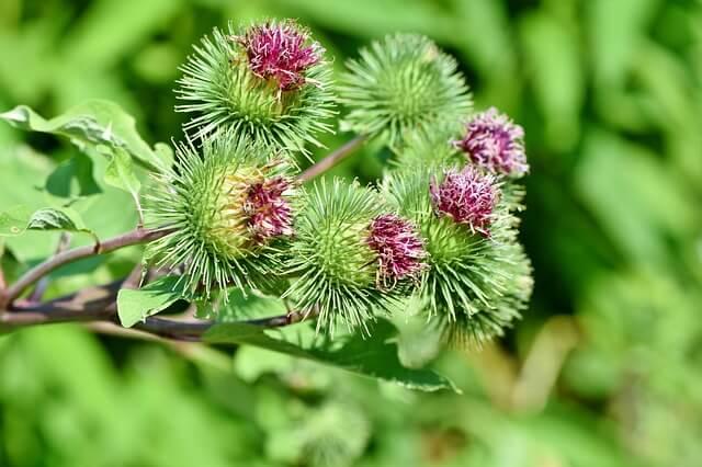 Plantes médicinales : présentation de quelques plantes et de leurs propriétés et bienfaits