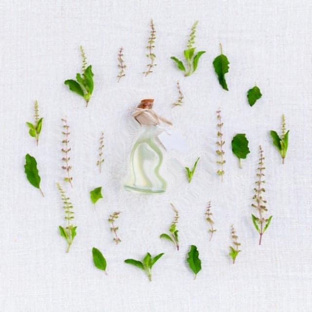 Les vertus des plantes aromatiques et leurs utilisations pour traiter les affections les plus courantes