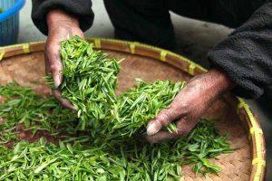 13 bienfaits du thé vert pour la santé