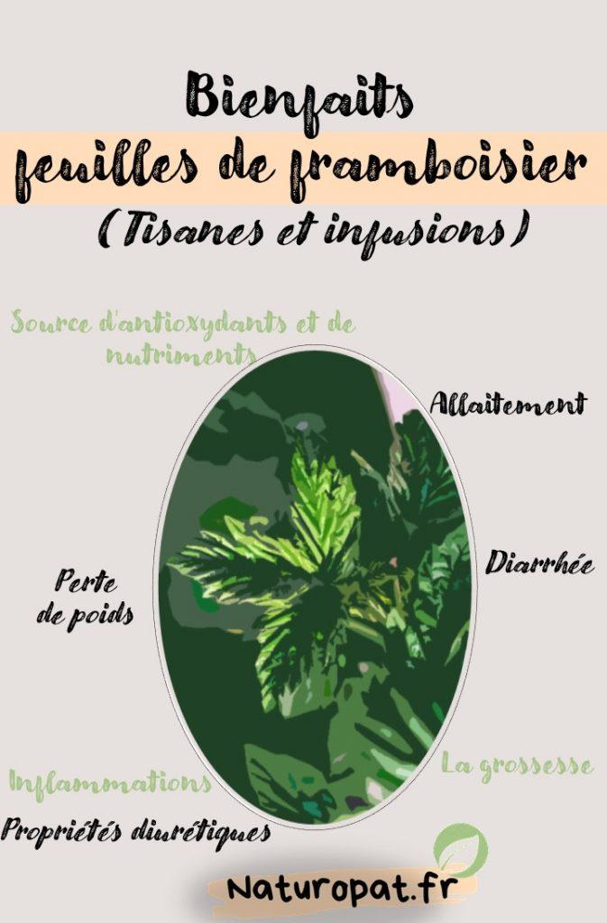 Infographie qui montre les Bienfaits de la tisane de feuilles de framboisier