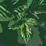 Bienfaits de la tisane de feuilles de framboisier : la boisson aux mille vertus