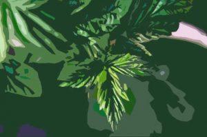 Read more about the article Bienfaits de la tisane de feuilles de framboisier : la boisson aux mille vertus