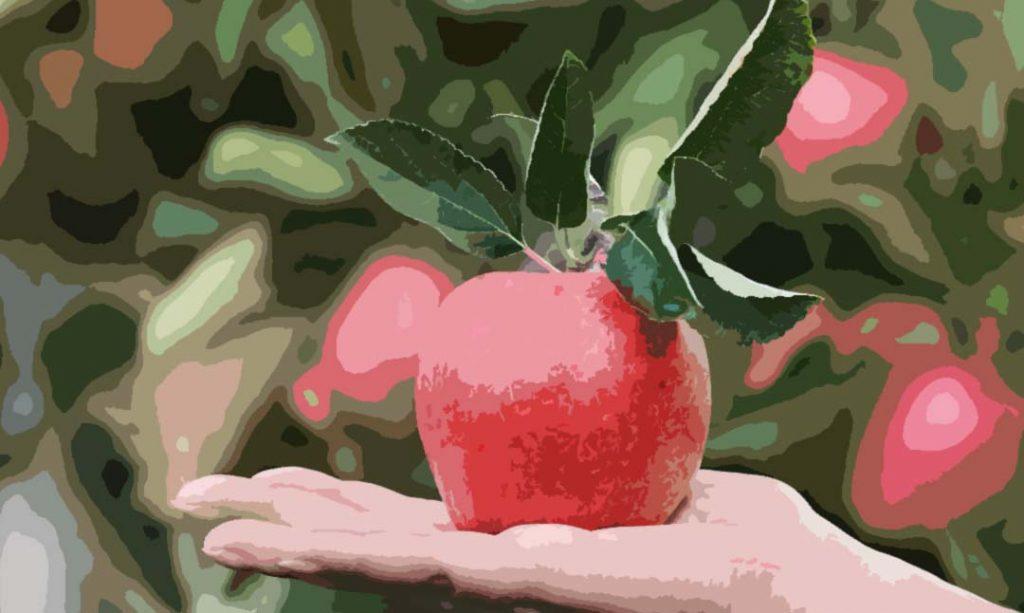 Une pomme que l'on peut utilise dans un régime monodiète